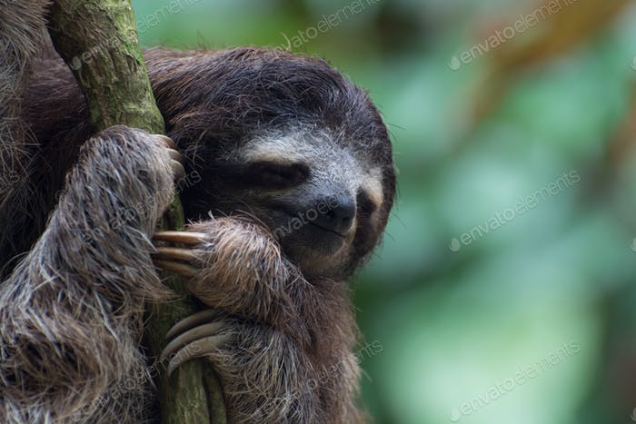A young sloth, in a small tree in the garden of our B&B in CostaRica!