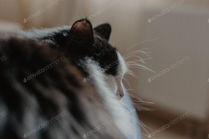 Close-up of a furry cat