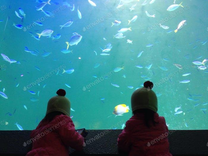 Zwillinge im Aquarium