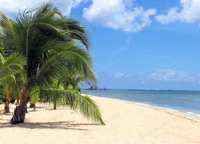 Tropical Beach Landscape in the Caribbean