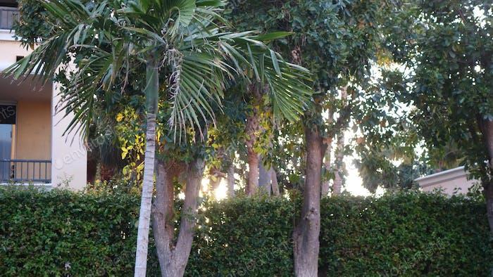 Florida Foliage