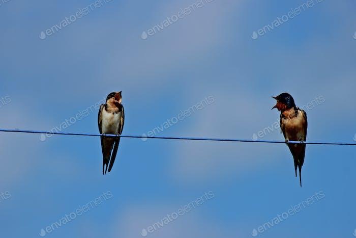 Talking birds on a wire