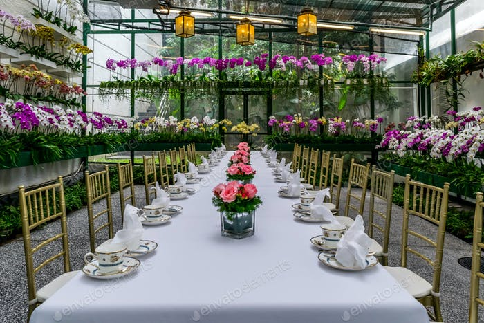 Orchid garden, dining table, retro teacup