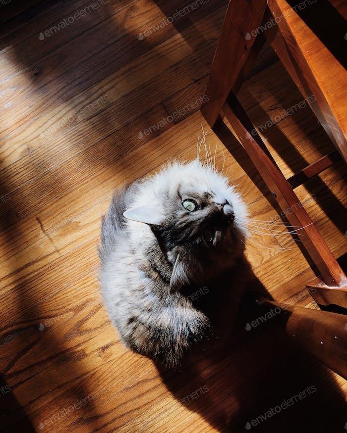 Kitty baby