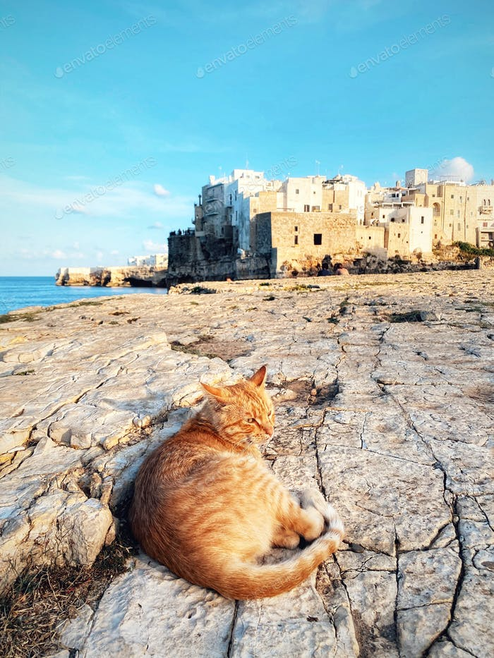 Cat resting by the sea