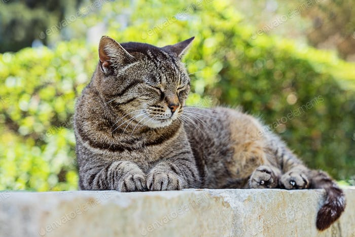 Close up portrait of sleeping cute brown tabby cat
