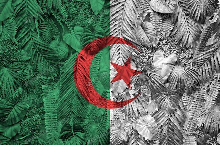Die  Algerien-Flagge ist auf vielen Blättern von Monstera-Palmen dargestellt. Trendiger modischer Hintergrund
