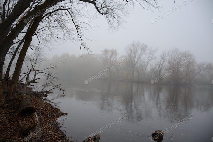 Nebel Morgen