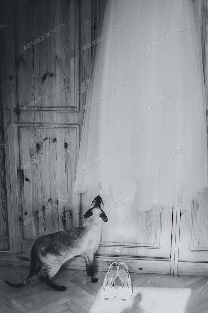 Cat and a wedding dress