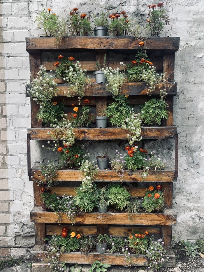 Wooden stand with plants in pots