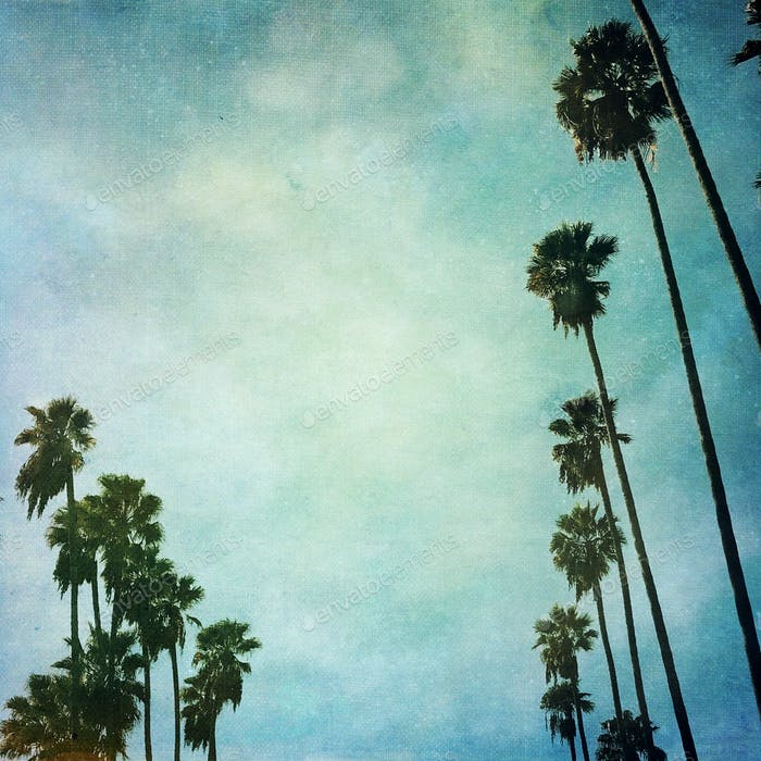 Palm trees line streets in Hollywood California and sway against a vintage sky
