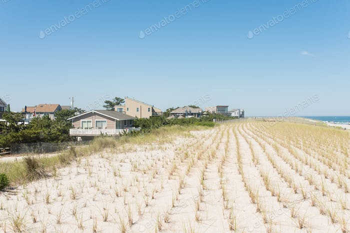 Fresh plants to keep the dunes intact along the coast, Long Beach Island Jersey Shore