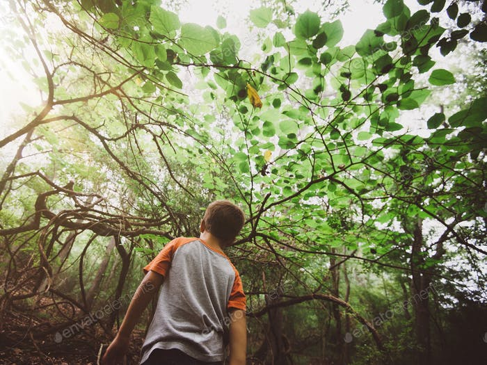 Adventuring through the woods, a little boy walking among the trees.