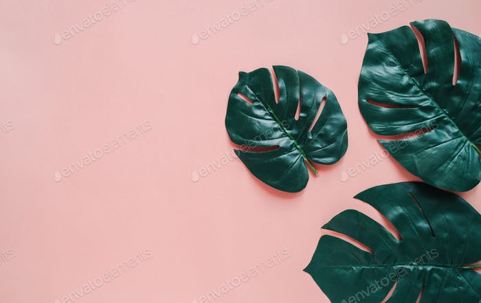 Flat lay of botany plant for background, organic style