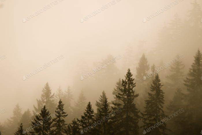 Snoqualmie fog