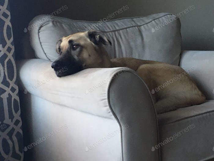 Mein Hund Shelby! Sie ist innen und außen ein schönes Tier.
