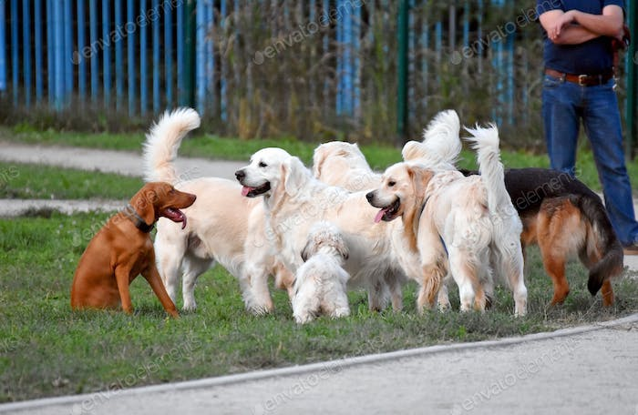 Doggies meeting in a park.