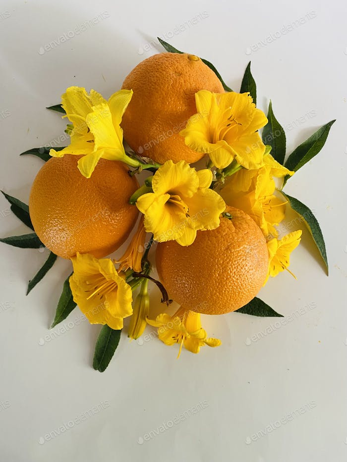 Oranges and daffodils on white background
