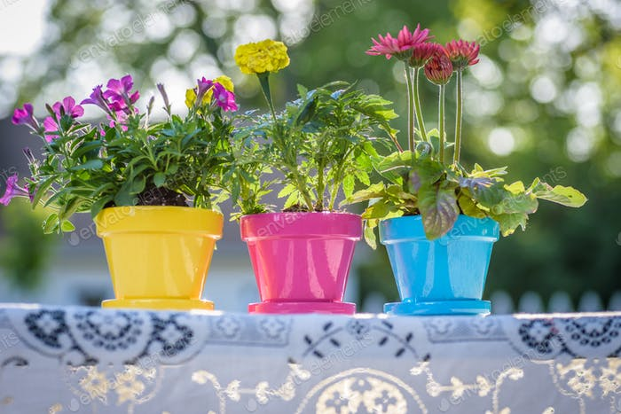 Three brightly colored flowerpots in a row