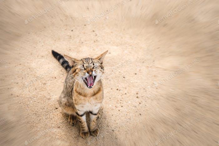 Cat meows