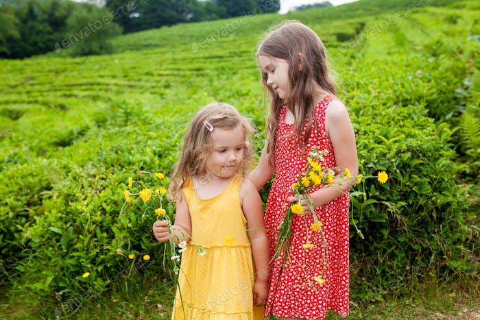 two little sisters girls in sundresses having fun on tea plantations on sunny summer day