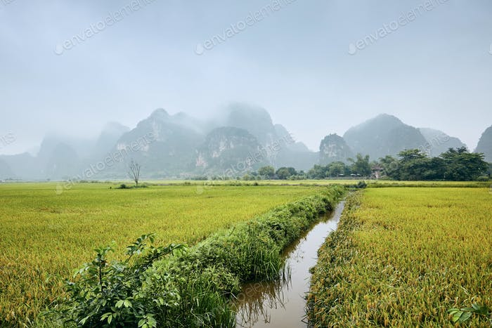 Rice fields against karst mountains near Tam Coc in Ninh Binh province, Vietnam