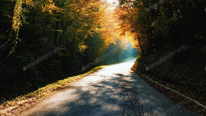 Bright light through trees, road, autumn, fall, no people, empty, direction, inspiraitonal.