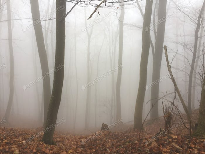 Foggy forest with dried leaves