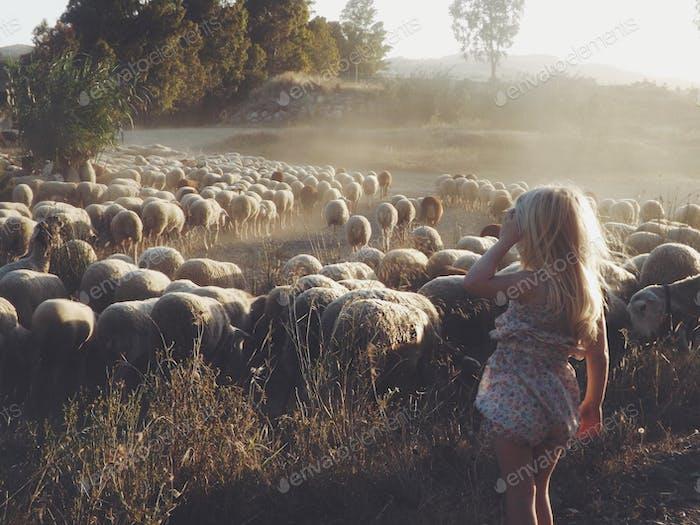 Tiny Shepherd