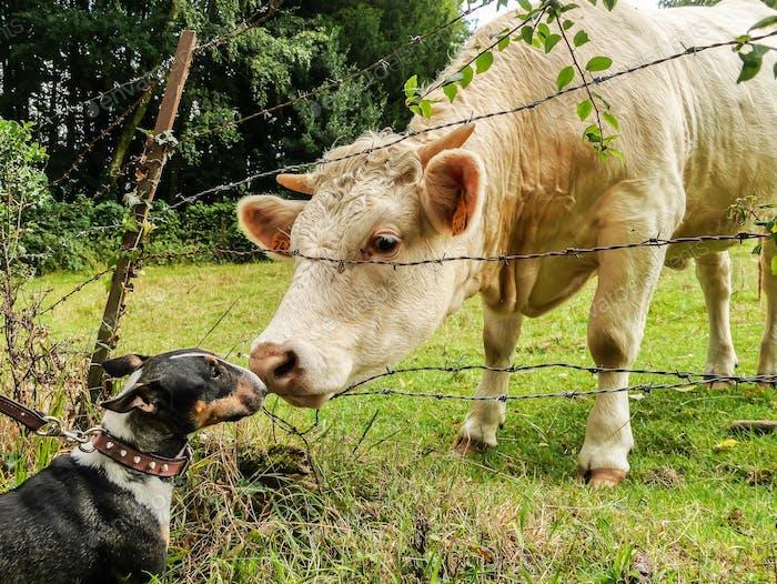 Liebe zu Tieren