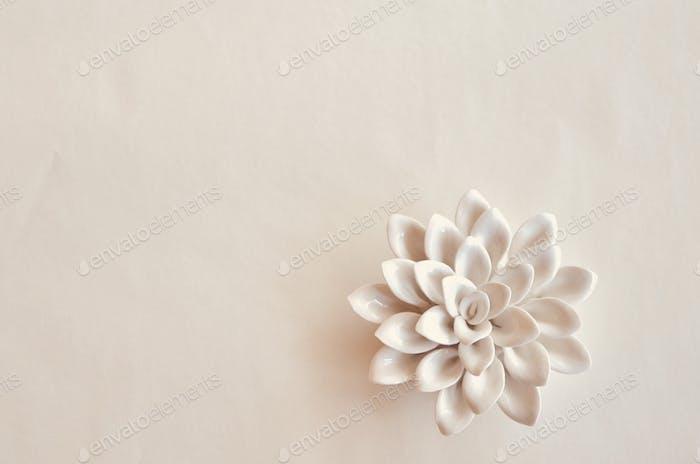 White porcelain flower on white background