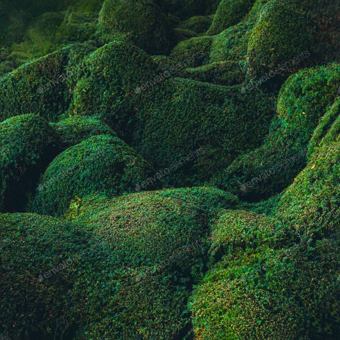 Abstract waved and hilly green plants background. Biophilia concept. Nature, bio design.