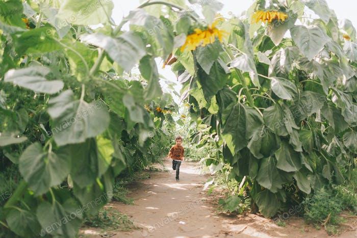 A little boy running through a field of sunflowers.