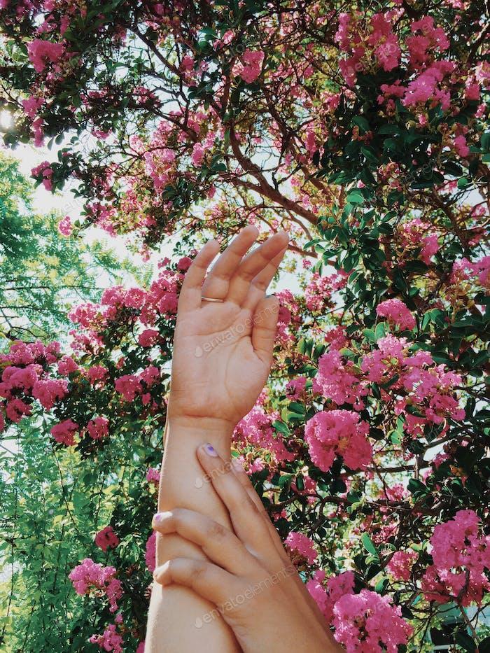 My girlfriends hand reaching pink flowers.