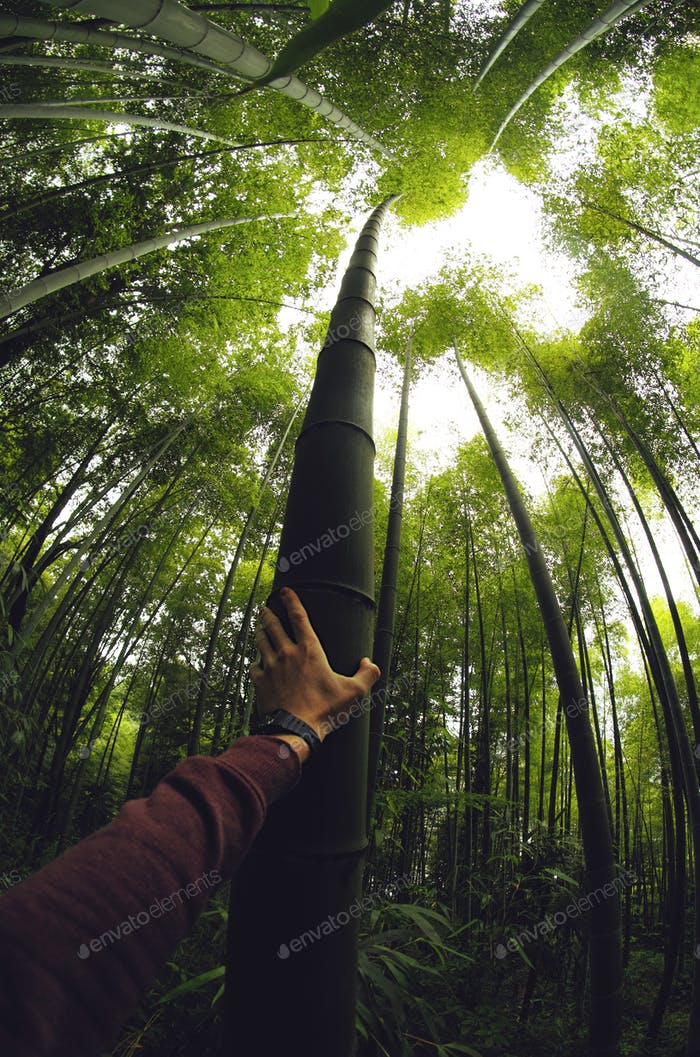 A photo of a millenial touching a giant bamboo tree in a forest.