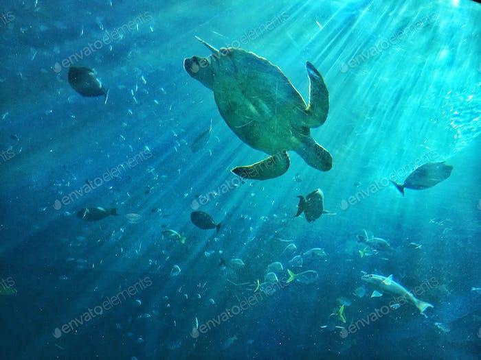 Turtle beach Under the blue sea