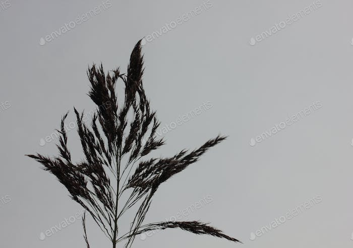 Minimalist reed silhouette against gray sky room for copy