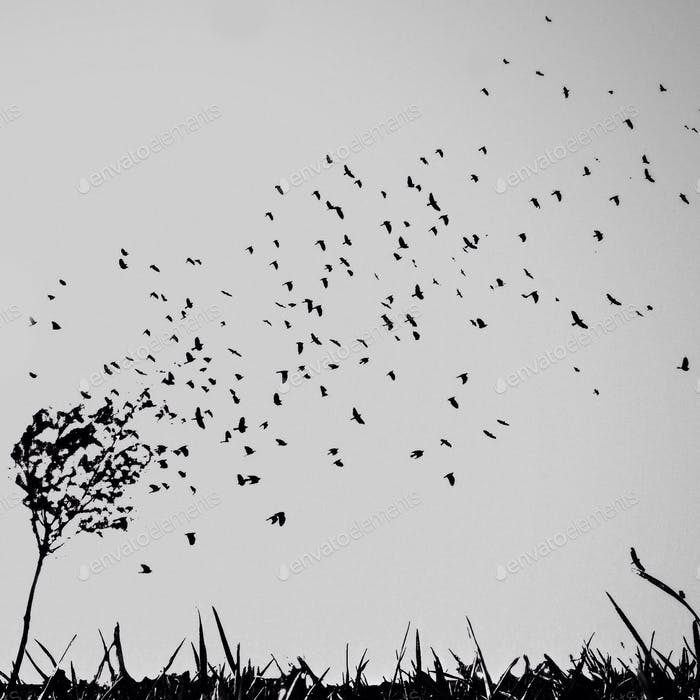 Birds are leaving