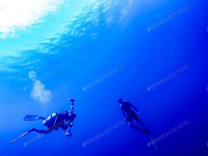 "Underwater photographer working   Belize reefs  2016 ""NOMINATED"""