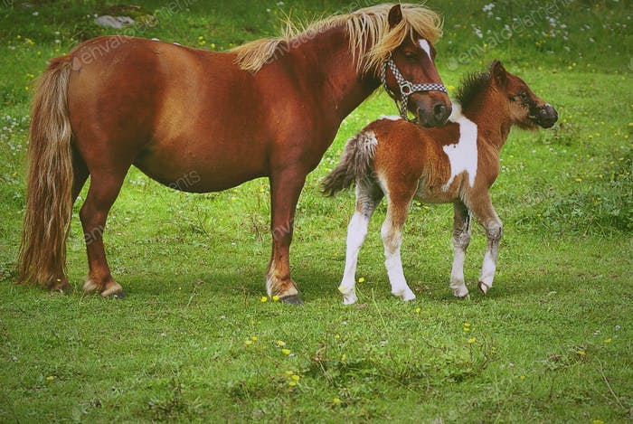 Pony and her foal