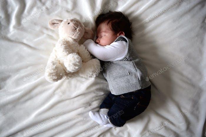 Lovin the Teddy