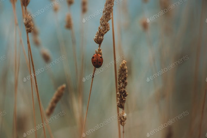 Ladybug. Close-up. Macro. Background. Desktop. Focus on foreground. Poster. Bokeh. Selective focus.
