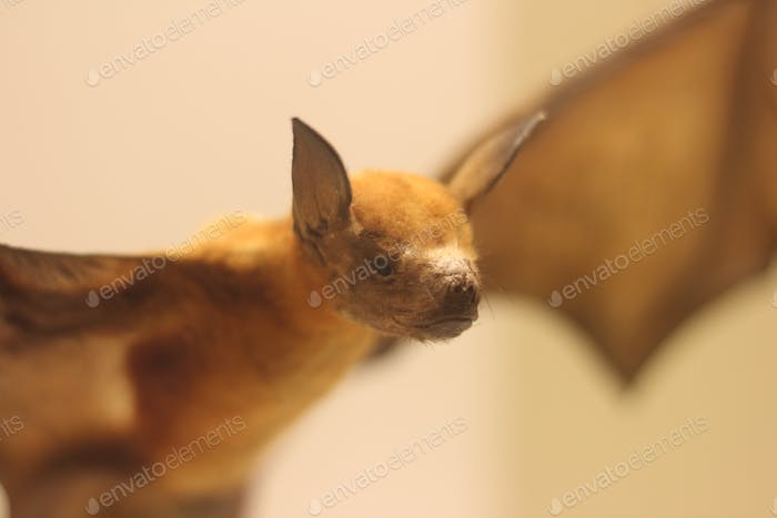Bird flu and bat spread deadly coronavirus
