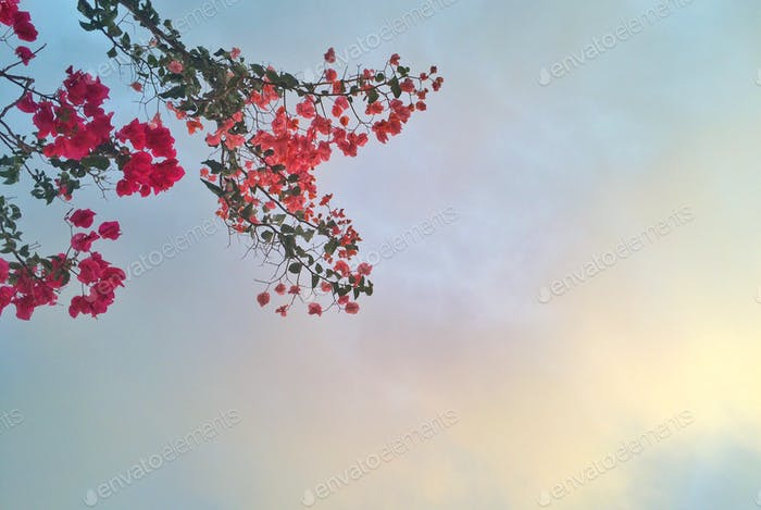 flowers drowning a lovely heart in the sky .. for all of you ladies 😊