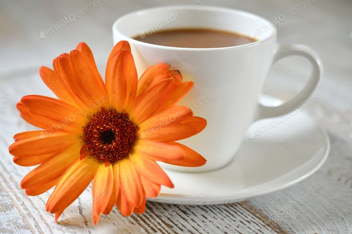 An orange Gerber daisy resting on a saucer of a coffee cup.