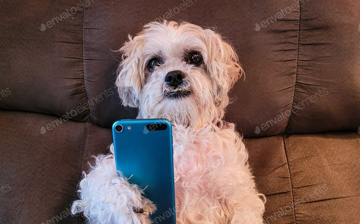 Smart dog using smart phone...