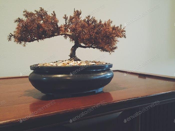 Dead Bonsai