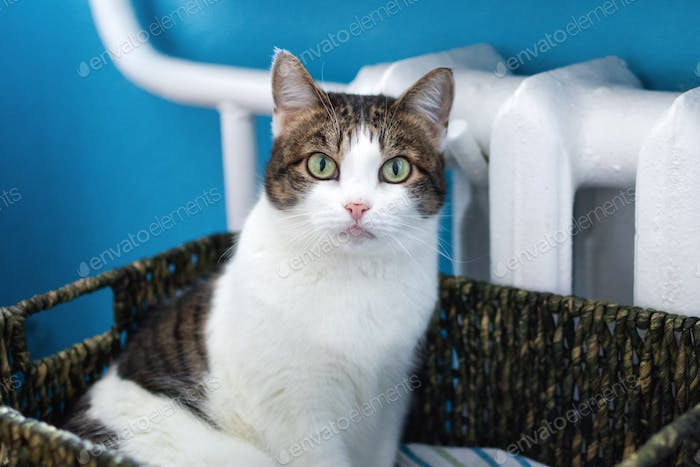 Adorable white tabby cat with green eyes is sitting in cat bed near to heater and looking into the