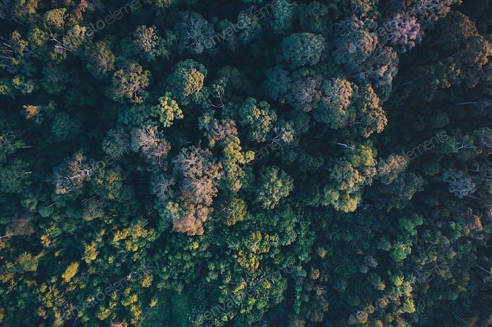 Lush rainforest of Borneo.