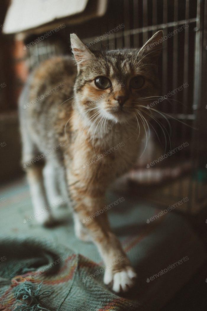 lindo gato en el refugio, ayudar a los animales, caridad, filantropía, en busca de casa